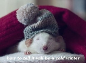 how to tell it will be a cold winter