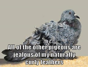 All of the other pigeons are jealous of my naturally                                  curly feathers