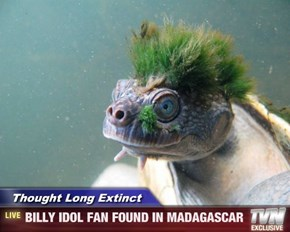 Thought Long Extinct   - BILLY IDOL FAN FOUND IN MADAGASCAR