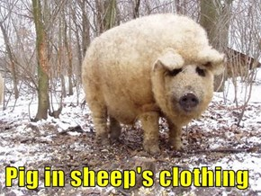Pig in sheep's clothing