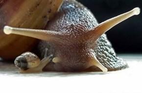 Someone's A Little Slug-ish