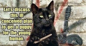 Let's  discuss  this  ill  conceived  plan  to  get  a  puppy  for  the  young  human.