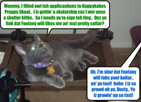 A new an' bery handsom young kitty signs up for KKPS..  All teh girl kitties ar sure to luv dis rambunctious Russian Blue kittie!