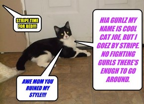 HIA GURLZ MY NAME IS COOL CAT JOE, BUT I GOEZ BY STRIPE. NO FIGHTING GURLS THERE'S ENUGH TO GO AROUND.