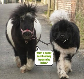 wut?  u neber see'd a dawg 'n pony sho bafor?