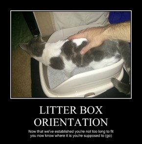 LITTER BOX ORIENTATION