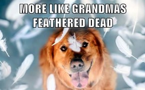 MORE LIKE GRANDMAS FEATHERED DEAD