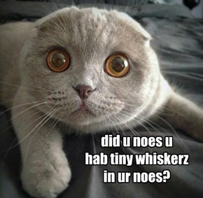 did u noes u  hab tiny whiskerz in ur noes?