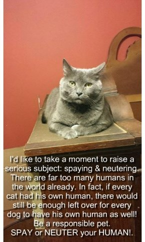I'd like to take a moment to raise a serious subject: spaying & neutering. There are far too many humans in the world already. In fact, if every  cat had his own human, there would still be enough left over for every dog to have his own human as well!  Be