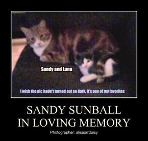 SANDY SUNBALL IN LOVING MEMORY