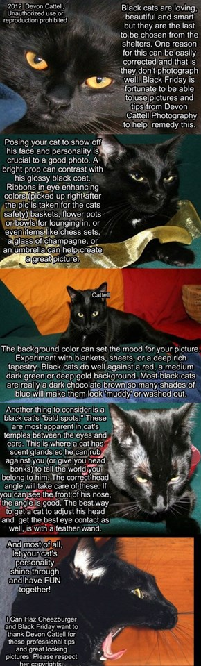 Tips For Photographing Black Cats