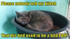 Please nobody tell my kitteh  That his bed used to be a bed PAN!