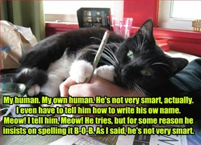 My human. My own human. He's not very smart, actually.  I even have to tell him how to write his ow name.  Meow! I tell him, Meow! He tries, but for some reason he insists on spelling it B-O-B. As I said, he's not very smart.