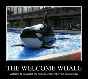 THE WELCOME WHALE