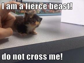 I am a fierce beast!  do not cross me!