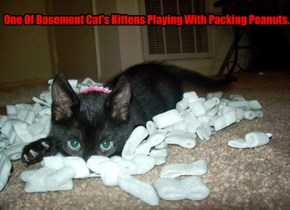 One Of Basement Cat's Kittens Playing With Packing Peanuts.