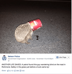 This Hedgehog Needed a McRescue and Got It