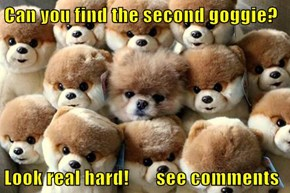 Can you find the second goggie?  Look real hard!       see comments