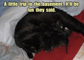 Baement Cat gene pool increases