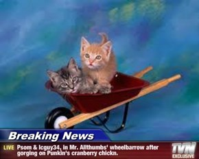 Breaking News - Psom & Icguy34, in Mr. Allthumbs' wheelbarrow after gorging on Punkin's cranberry chickn.