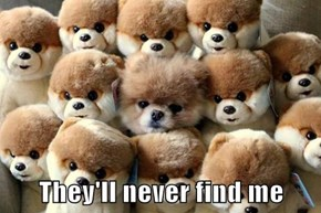 They'll never find me