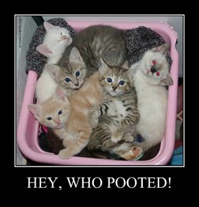 HEY, WHO POOTED!
