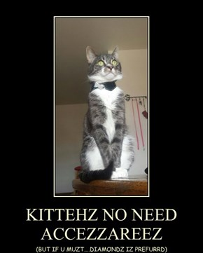 KITTEHZ NO NEED  ACCEZZAREEZ