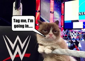 Grumpy Cat Gets Ready To Rumble