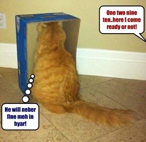Roscoe lubs hidey go seek!
