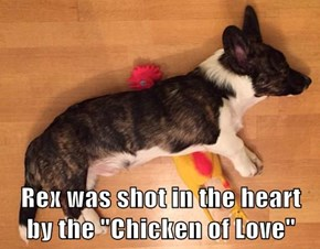 """Rex was shot in the heart by the """"Chicken of Love"""""""