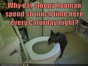 Why dat stoopy hooman spend so much time here every Caturday night?