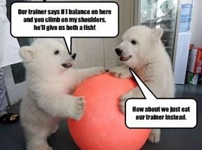 The reason circuses don't use polar bears.