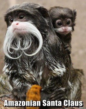 Amazonian Santa Claus