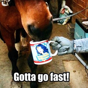 I won't say neigh to another cup.