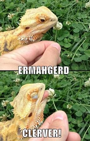 ERMAHGERD           CLERVER!