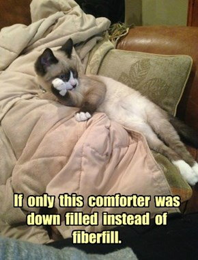 First World Cat Problem #53