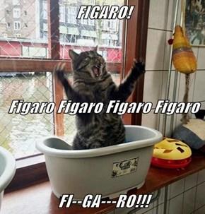 FIGARO! Figaro Figaro Figaro Figaro FI--GA---RO!!!