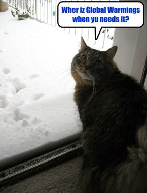 Kittie haz a disappointments..