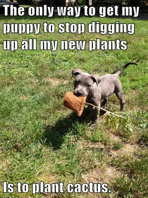 The only way to get my puppy to stop digging up all my new plants  Is to plant cactus.
