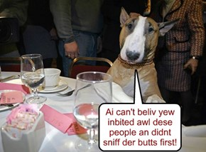 Ai can't beliv yew inbited awl dese people an didnt sniff der butts first!