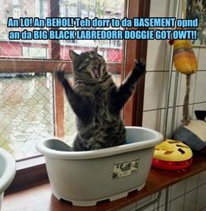 An LO! An BEHOL! Teh dorr to da BASEMENT opnd an da BIG BLACK LABREDORR DOGGIE GOT OWT!!