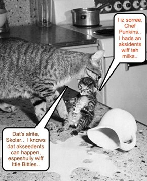 Chef Punkin iz bery understanding wiff Ittie Bitties.. He'd shur make a great daddy kitteh if dat wer to happen wiff hims an' Missy.. (hehe)