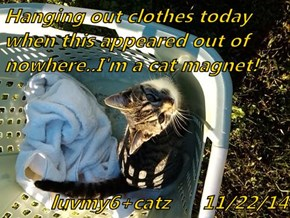 Hanging out clothes today when this appeared out of nowhere..I'm a cat magnet!  luvmy6+catz      11/22/14
