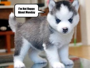 I'm Not Happy About Monday