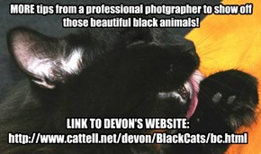 How To Photograph Black Cats-And Dogs Too!
