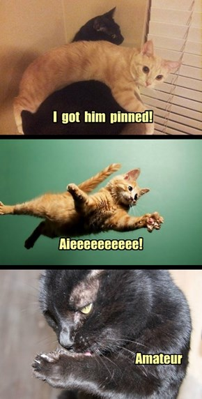 Black Friday 2014 - Never wrestle a black cat