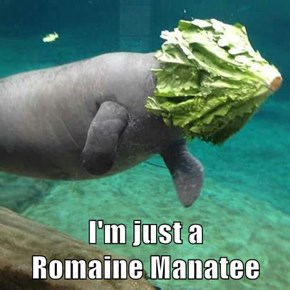 I'm just a                                          Romaine Manatee