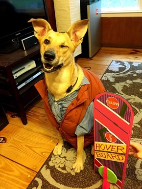 Marty McWoof