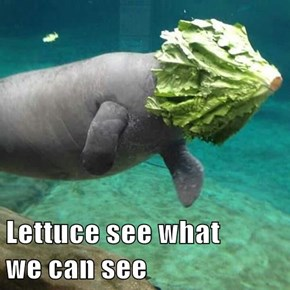 Lettuce see what                                we can see