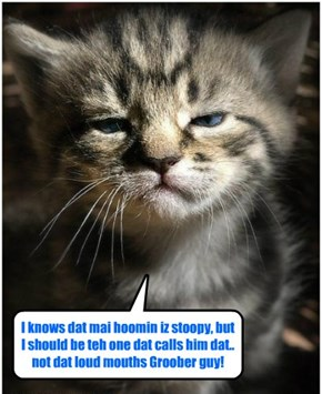 Kittie haz a sad cuz Obamacare arkitect Dr. Jonathun Groober called all Americans stoopid!